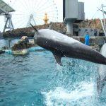 名古屋港水族館の混雑状況やイルカショー、レストラン、駐車場の混み具合