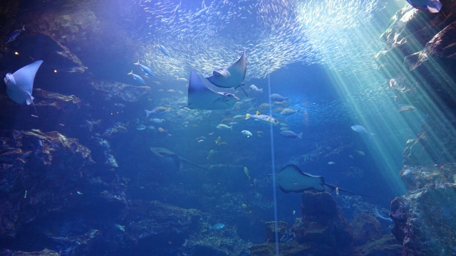 京都水族館の混雑状況やイルカショー、食事レストラン、駐車場の混み具合