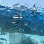 サンシャイン水族館の混雑状況やショー、展望台、夜、駐車場の混み具合