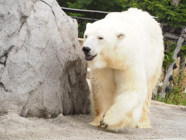 旭山動物園の混雑や見所、滞在時間に回り方、夜の楽しみ方、駐車場の場所
