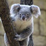 多摩動物公園の混雑や昆虫館、ナイトサファリ、コアラ、駐車場の混み具合